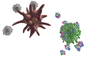 3D illustration of dendritic and T cells